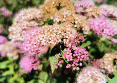 Blume, die nicht namentlich genannt werden wollte©Ann-Kristin Iwersen 2020.